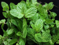Menthol und andere Aromastoffe